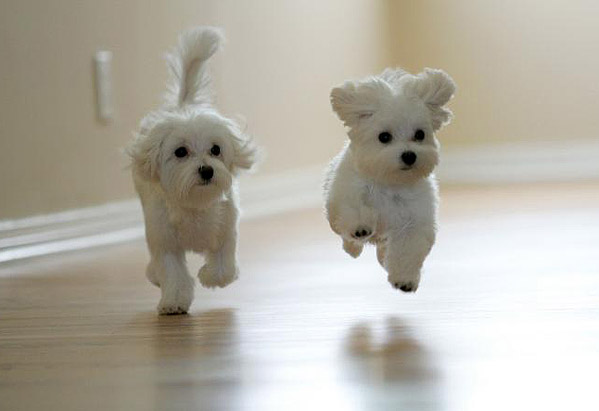 Http up trivialbeing org img cuteypuppieswoo